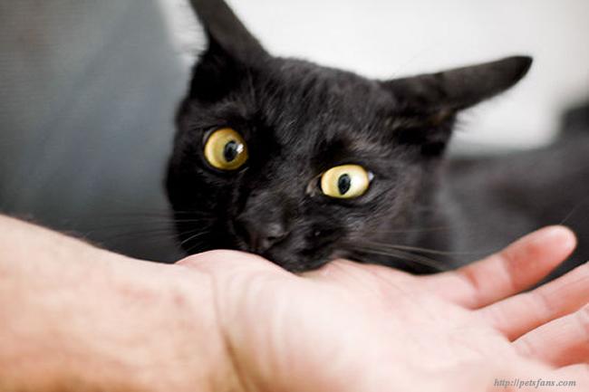 PetVet | Kedilerde Davranış Bozukluğu (2/3) İnsanlara karşı saldırganlık: Kedilerin saldırgan olması normal midir?
